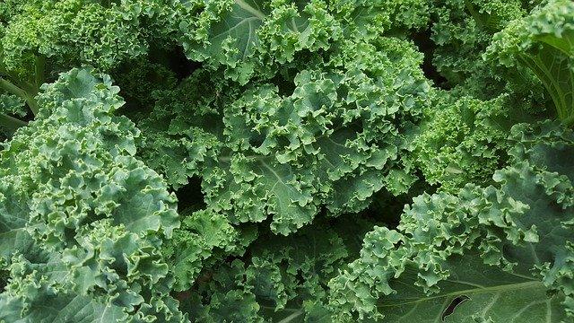Kale: beneficios y contraindicaciones