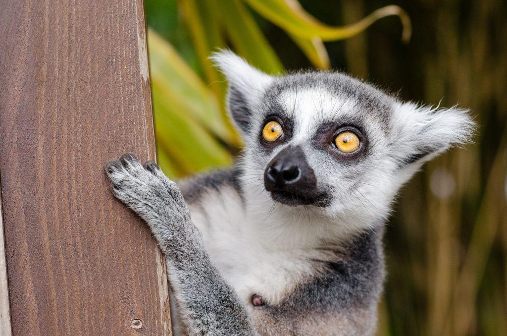 mejor época para viajar a Madagascar