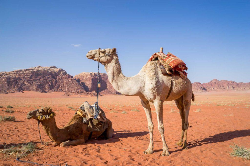 mejor época para viajar a Jordania