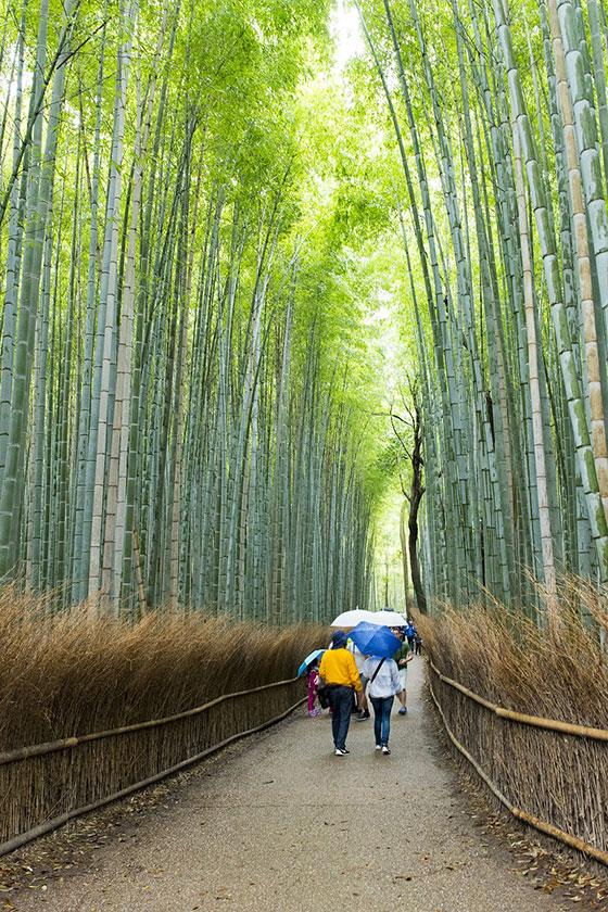 Bosque Arashiyama